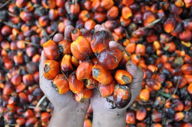 Consumir aceite de palma una 'muy mala idea'