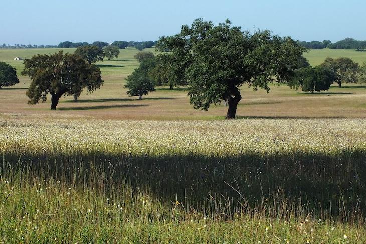 Más asesoramiento a empresarios de la Red Natura 2000