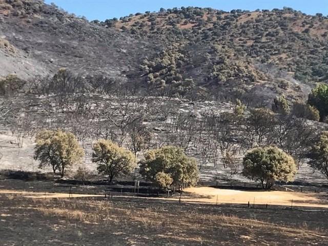 El incendio de Cazalla ha afectado a unas