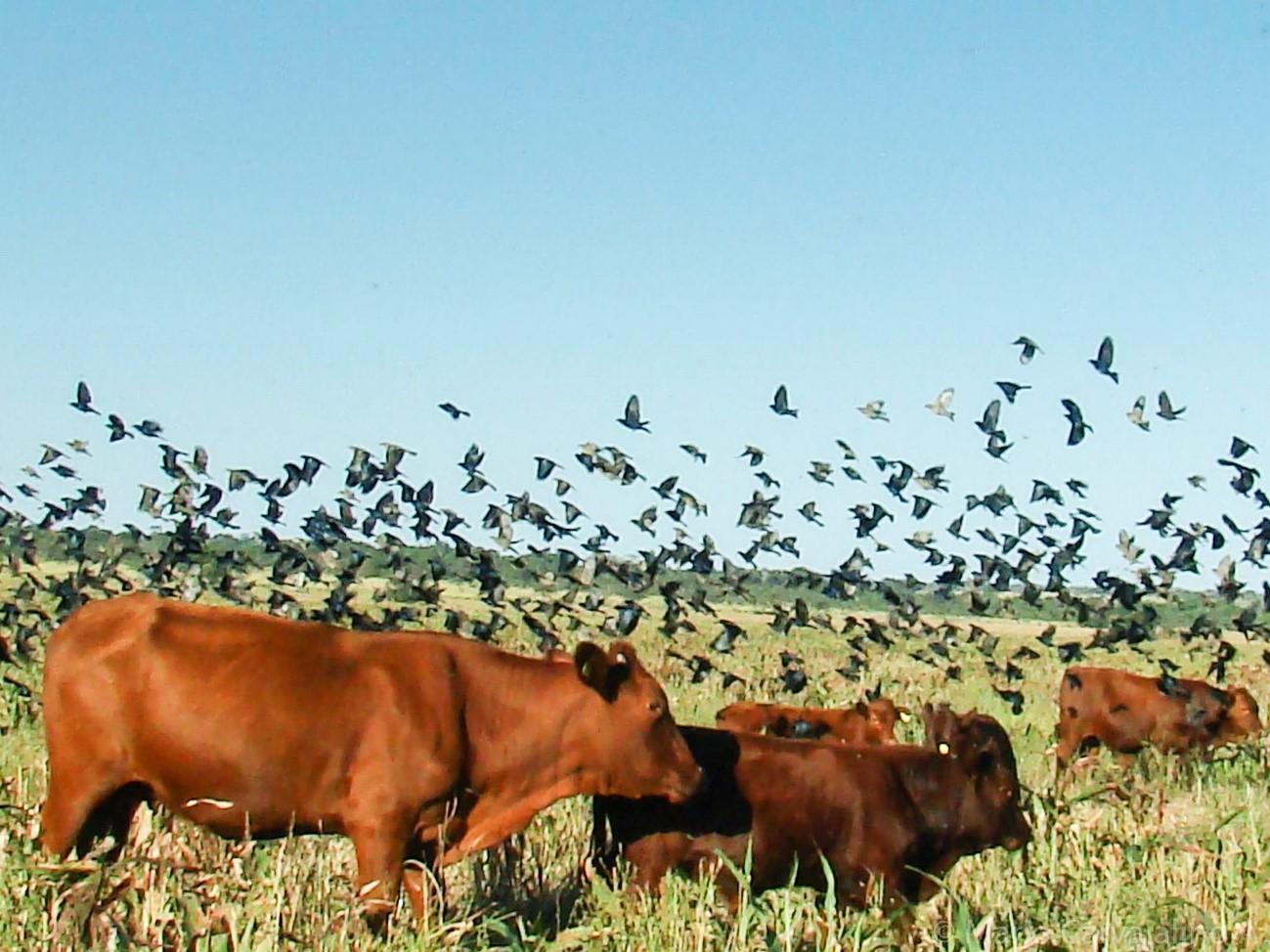 Agricultura y ganadería sostenibles en el Rio de la Plata
