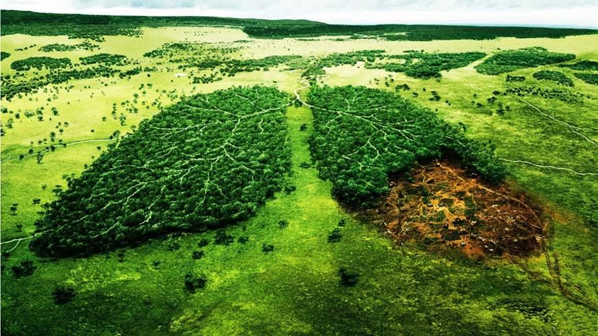 2016 un año perdido para el medio ambiente