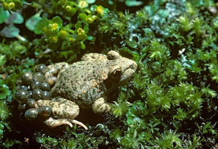 COP15: es 'vital' proteger la biodiversidad