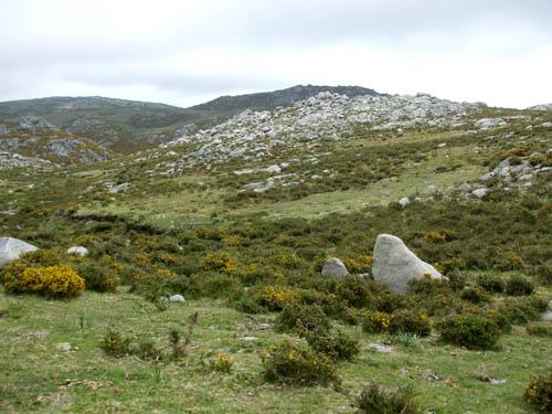 APDDA, acusa a la Xunta de Galicia de poner en riesgo el lobo ibérico de la Sierra del Barbanza