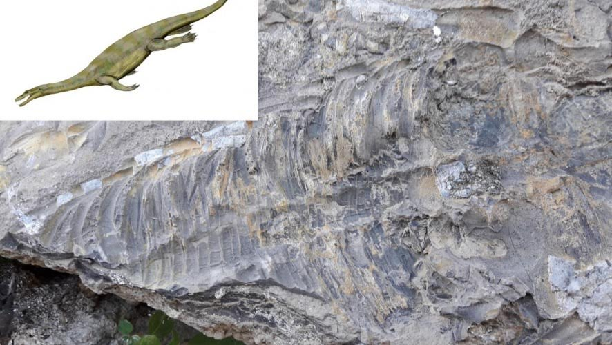Hallan en Cehegín el fósil de vertebrado más antiguo localizado hasta ahora en la Región