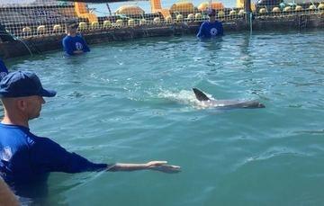 Avanza rescate de la vaquita marina