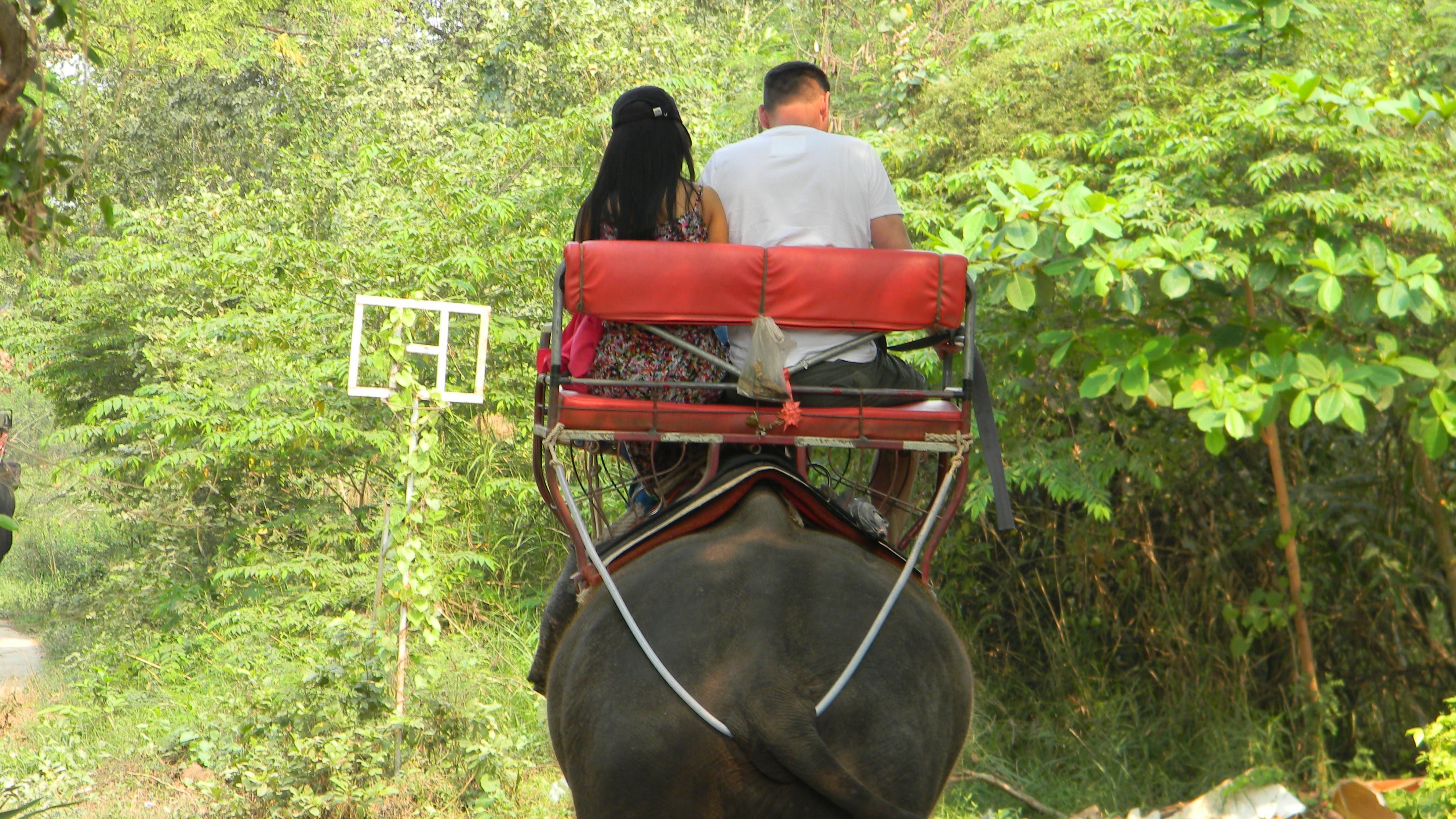 No te pasees a lomos de los elefantes asiáticos