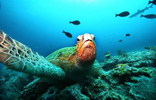 La tortuga verde marina 'sentenciada' a desaparecer
