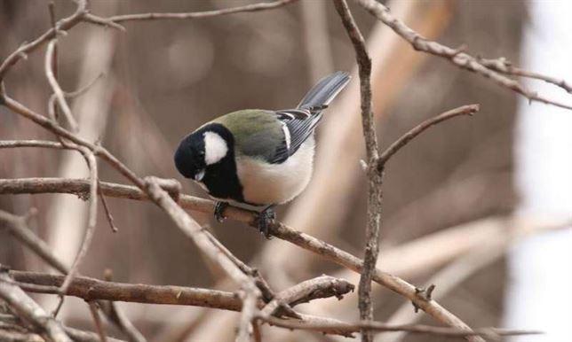La sintaxis y un pequeño pájaro japonés