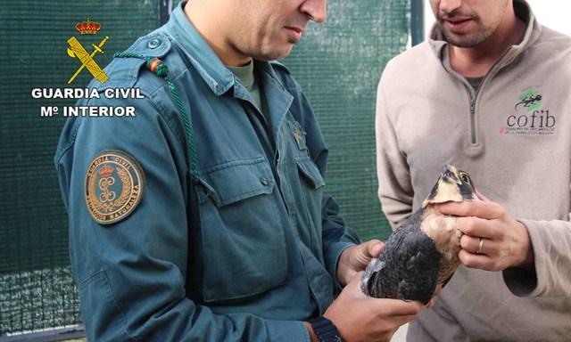 Investigan a ocho personas como presuntos autores de delitos contra la fauna en Baleares