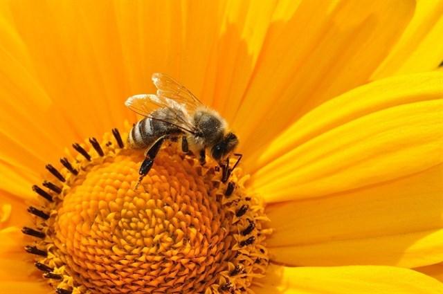 Ciudadanos europeos se movilizaron este sábado contra el glifosato y defender la polinización de las abejas