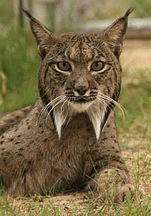 Si te apasiona la fauna ibérica y quieres saber más, apúntate a este curso