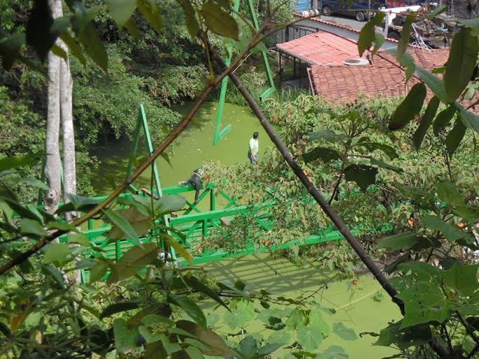 Costa Rica. Fundazoo asegura que reconstruyó el 80% del Simón Bolívar