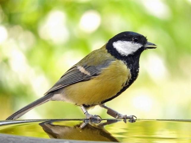 La relación entre aves se 'estrecha' cuando se pierden compañeras de la bandada