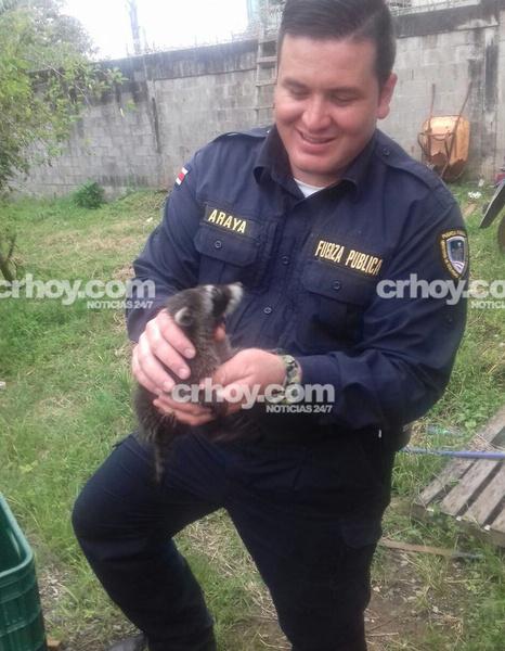 Policías rescatan a mapaches bebés que quedaron huérfanos