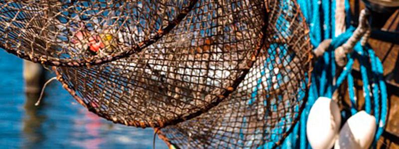Cooperativas pesqueras de Punta Allen, ejemplos de éxito