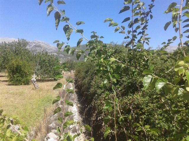 El PP de Selva exige al equipo de gobierno que presione a Medio Ambiente para la limpieza de los torrentes
