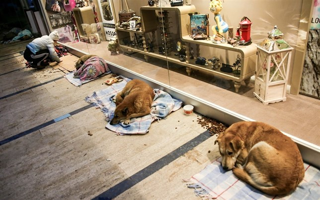 Este centro comercial sirve de refugio para perros callejeros (Mira el VIDEO)