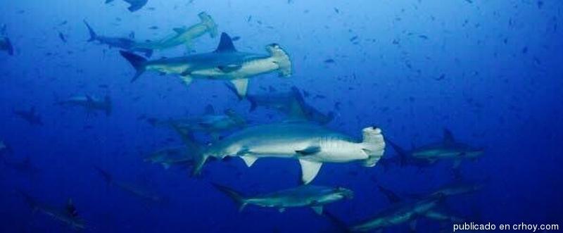 Científicos van tras especies no-nativas en Isla del Coco