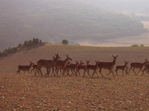 El cambio climático y los ciervos cantábricos