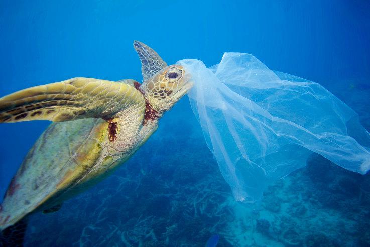 ¡Salva el Mediterráneo de la invasión de plásticos!