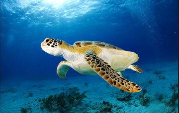 Comprometidos con el medio ambiente, preservamos nuestro patrimonio natural