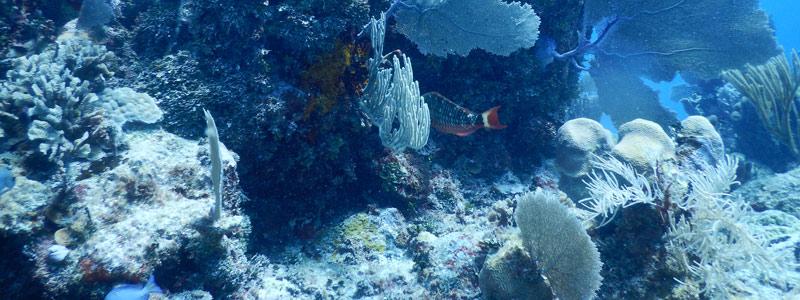 Mahahual: el colapso del arrecife más prístino del Caribe