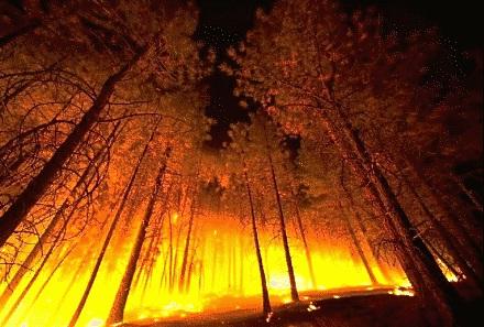 Es 'vital' una estrategia de prevención del fuego y de una gestión forestal