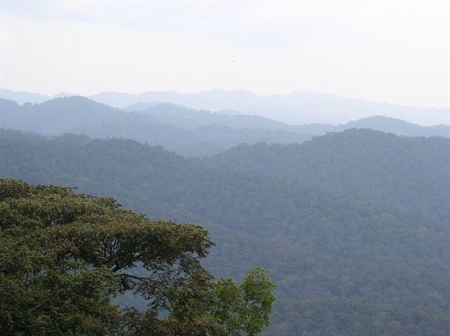 Preservando los bosques tropicales cuidamos la biodiversidad