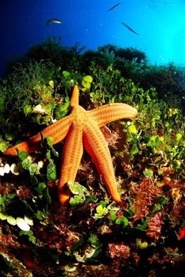 La UE compromete más de 550 millones en 36 medidas para lograr océanos más limpios, seguros y con más recursos