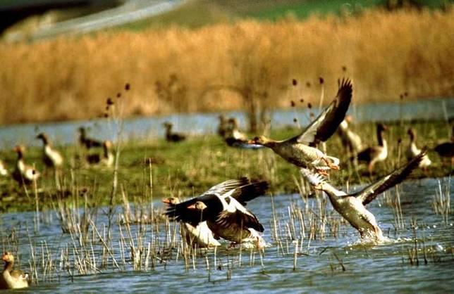 La Fundación Biodiversidad celebra el Día Mundial de los Humedales