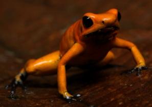 Colombia, protección del hábitat de uno de los animales más mortíferos del mundo