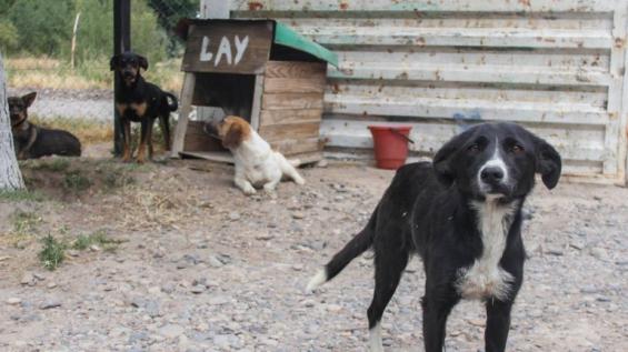 Argentina: Ya adoptaron a 180 perros del refugio de la Isla Jordán en Río Negro
