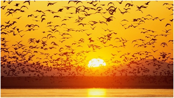 Aves en peligro: la Lista Roja del 2015