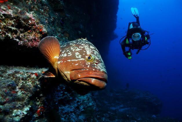Hacen entrega a todos los grupos parlamentarios de 12.719 firmas en apoyo al Parque Nacional marino de El Hierro