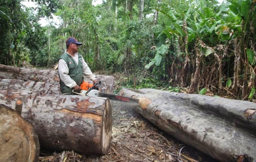 Los incendios forestales y la tala ilegal, una \'plaga\' para la India
