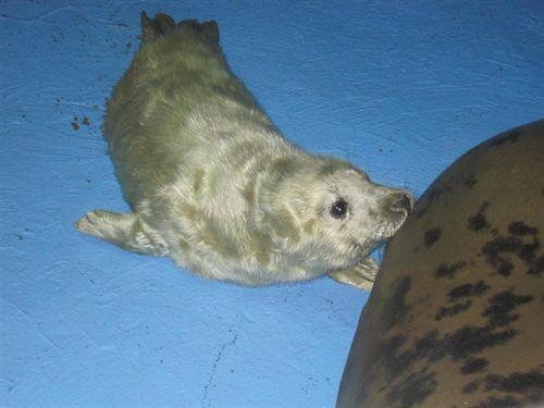 Animalistas lamentan el estado de las cinco focas llegadas al Zoo de Barcelona este año