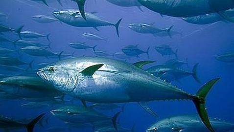 Suelta amarras el catamarán oceanográfico que estudiará el atún rojo en Baleares y la proliferación de medusas