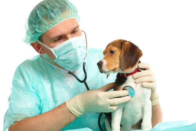 Los españoles con mascota acuden al veterinario pese a la crisis