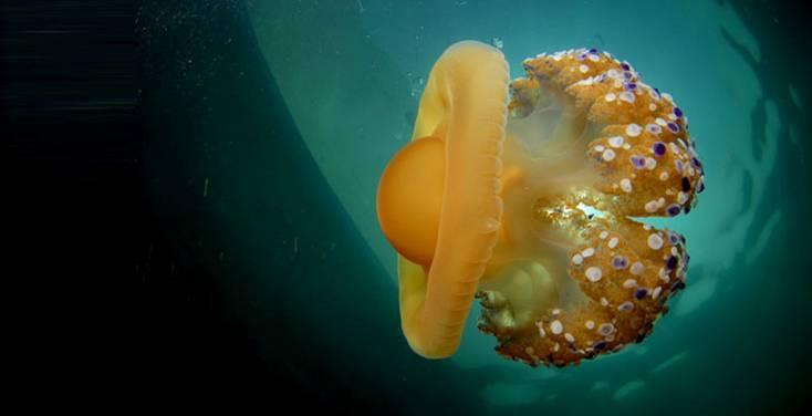 Conoce el proyecto más importante desarrollado en España sobre conservación marina