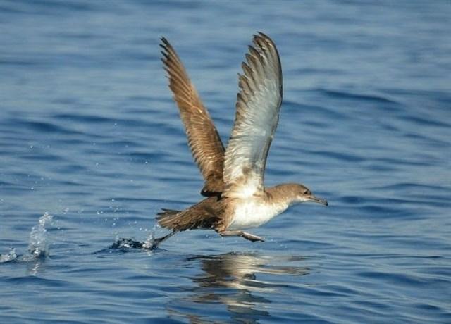 Las aves del Reino Unido 'dejadas de la mano de Dios'