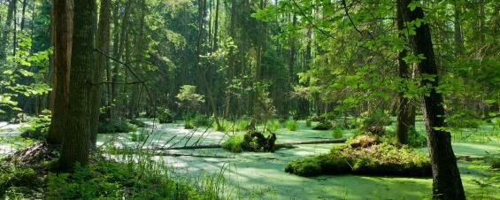 La tala amenaza a uno de los bosques más importantes de Europa