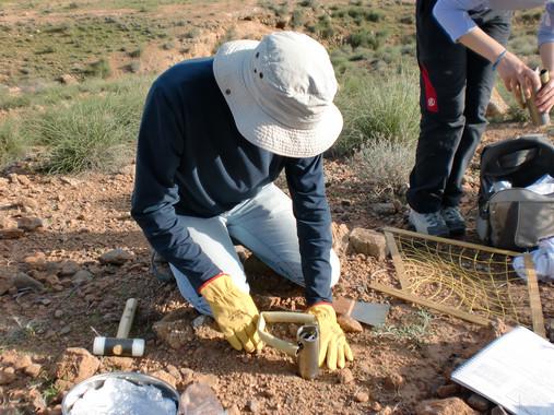 Los patrones ecológicos de las bacterias del suelo, al descubierto