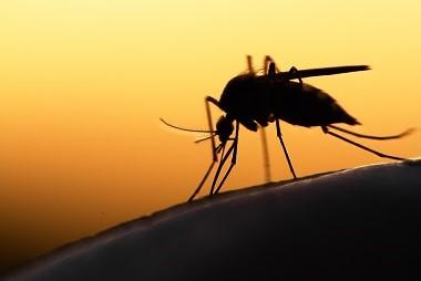 Todos contra los mosquitos en una lucha liderada por la ONU