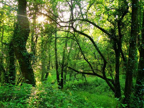 Rechazo frontal a vender bosques para reducir el déficit
