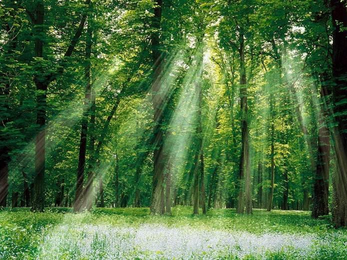 Segovia plantará un 'bosque sagrado' con árboles de doce especies