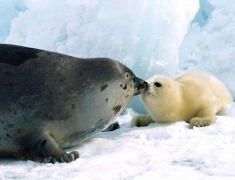 Concentración frente a la embajada de Canadá contra la matanza de focas