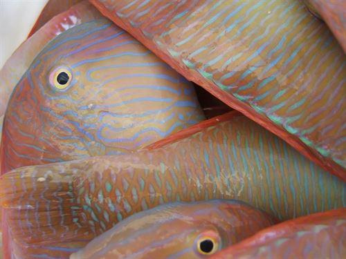 Europa 'pasa' de las recomendaciones científicas respecto a la pesca
