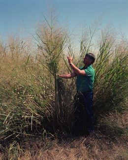 Cantabria convoca ayudas para la extracción de biomasa forestal