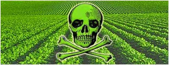 Monsanto pierde sus permisos para plantar en México