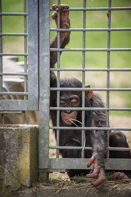 España, a la cola en protección de animales de compañía